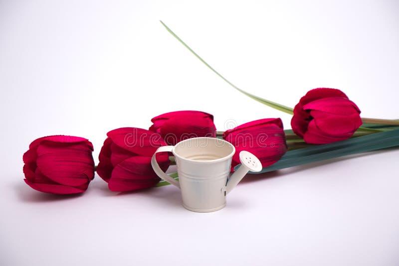 Rode tulpen en een witte gieter stock afbeeldingen