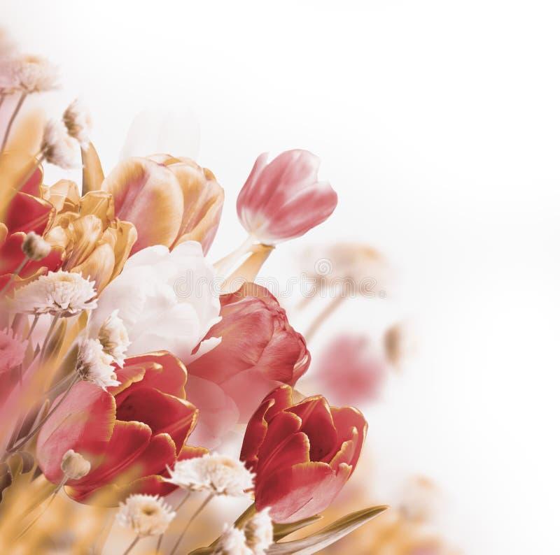 Rode tulpen met groen royalty-vrije stock foto