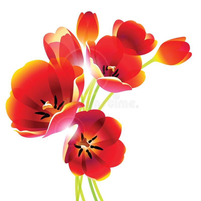 Rode tulpen met zonlicht stock afbeeldingen