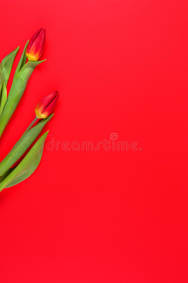 Rode tulpen op rode achtergrond royalty-vrije stock foto's
