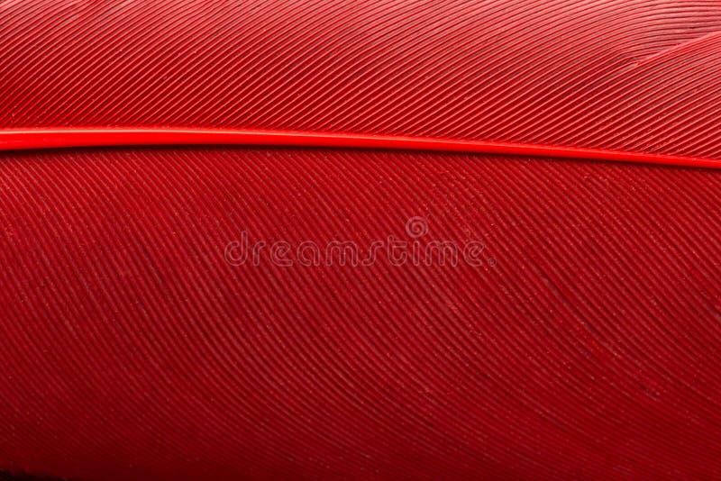 Rode veer dichte omhooggaand royalty-vrije stock fotografie