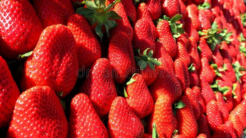 Rode verse aardbei van de lente royalty-vrije stock afbeeldingen