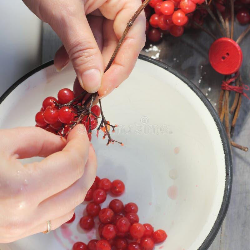 Rode viburnumtakjes royalty-vrije stock foto's