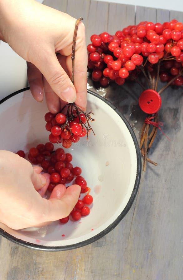 Rode viburnumtakjes stock afbeeldingen
