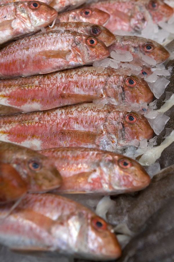 Rode vissen. De markt van vissen. Het mul van de kornet stock fotografie