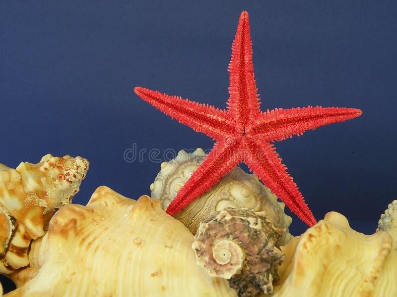 Rode vissenster en shells royalty-vrije stock afbeeldingen