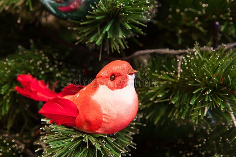 Rode vogel stock afbeeldingen