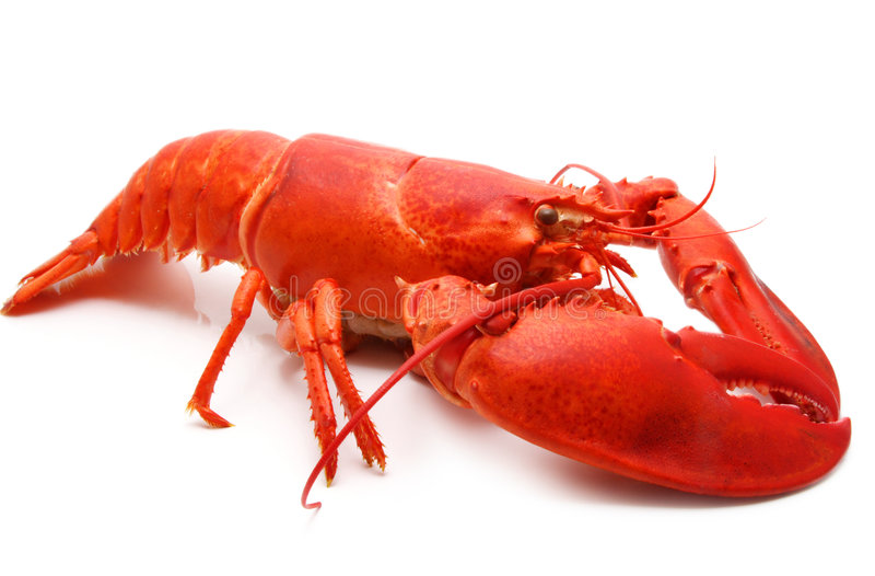 Rode zeekreeft stock foto