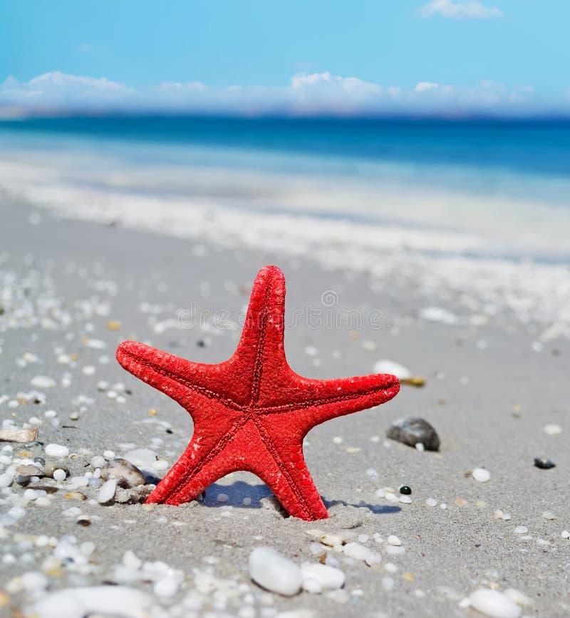 Download Rode zeester door de kust stock afbeelding. Afbeelding bestaande uit overzees - 54084569