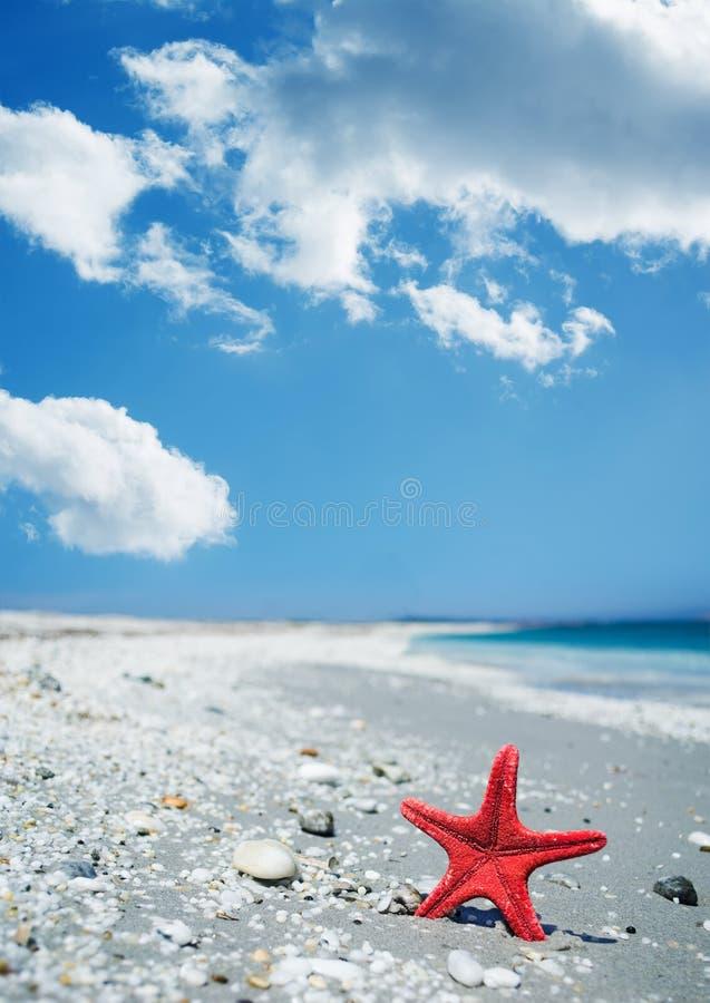 Download Rode zeester door de kust stock foto. Afbeelding bestaande uit kiezelstenen - 54086198