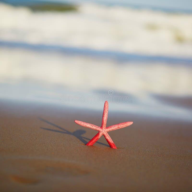 Rode zeester op exotisch zandstrand stock fotografie