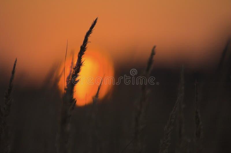 Rode zon stock foto's