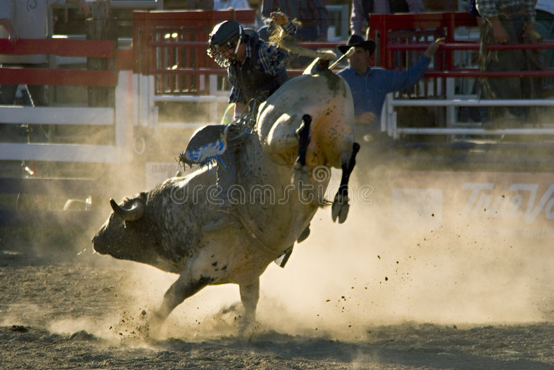 Rodeio Bull e cavaleiro fotografia de stock royalty free