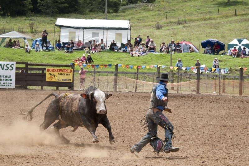 Rodeio - cowboy que está sendo perseguido por um touro imagem de stock royalty free