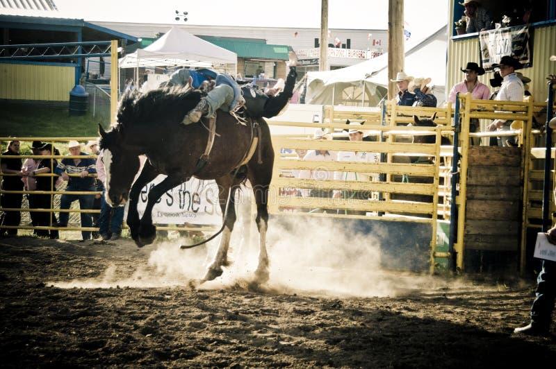 Rodeio e cowboys foto de stock