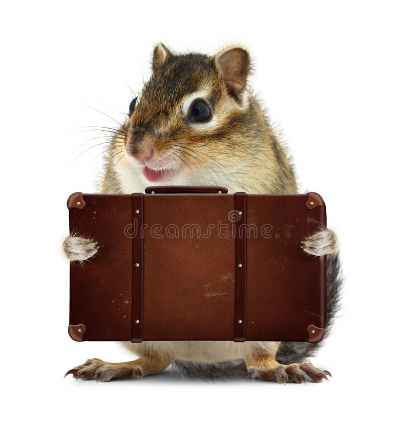 Rodent with suitcase on white, vacation concept stock images