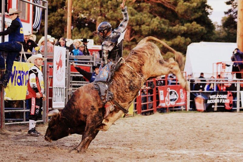 Rodeo zdjęcie royalty free