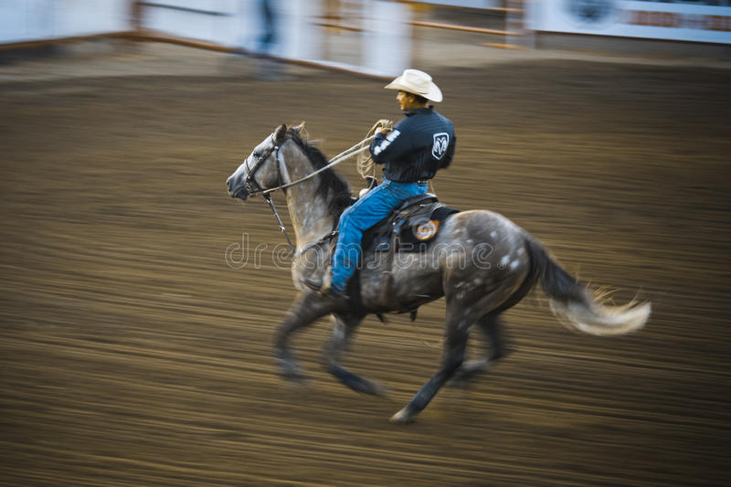 Download Rodeo editorial stock image. Image of dust, boots, bull - 21070504