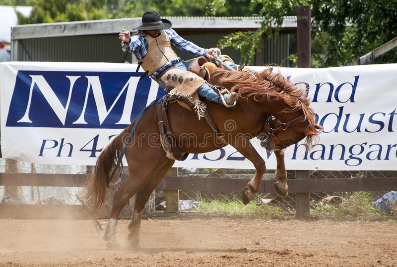 Rodeo fotografia stock