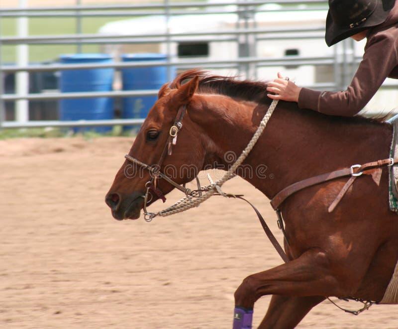 Rodeo 3 stockfotografie
