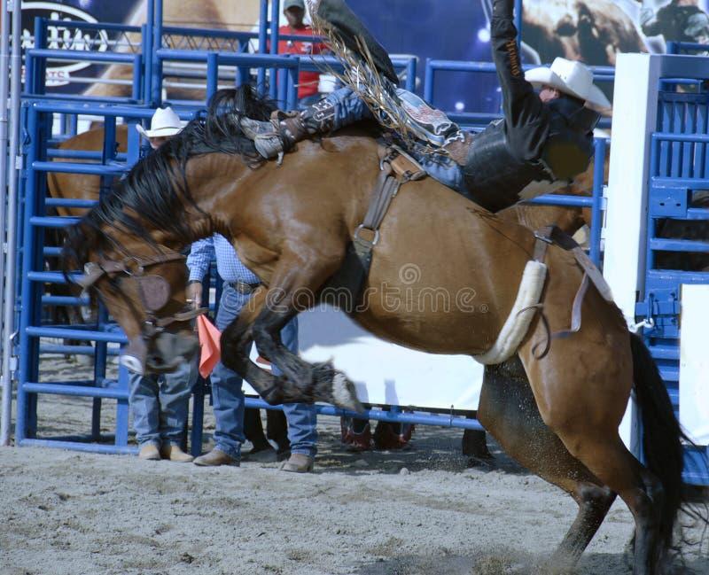 rodeo arkivfoton