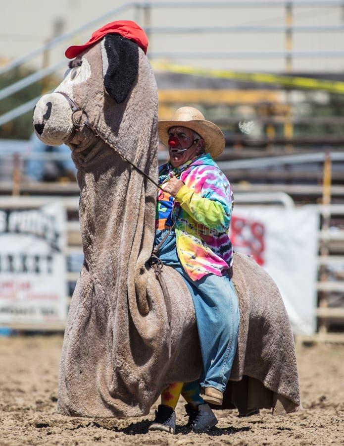 Rodeo błazen obrazy royalty free