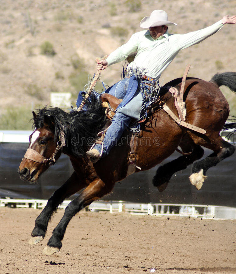Rodeo Bucking Bronc Rider Editorial Photography Image Of