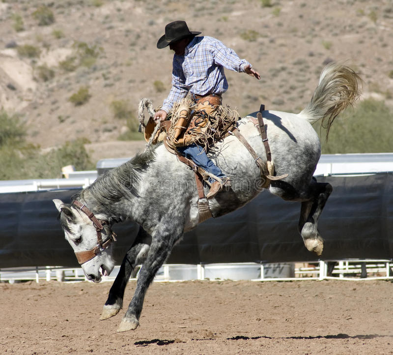 Rodeo Bucking Bronc Rider royalty free stock photo