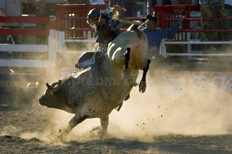 Rodeo Bull und Mitfahrer lizenzfreie stockfotografie
