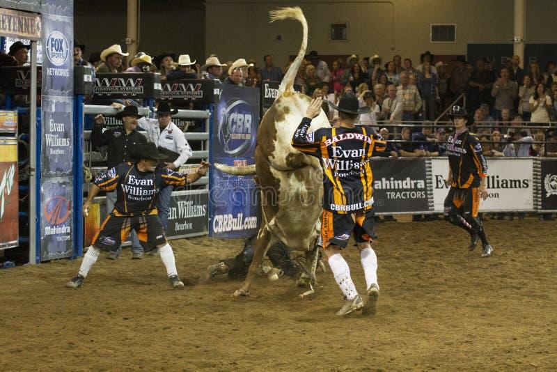 Rodeo byka jeźdza kowboje obrazy royalty free