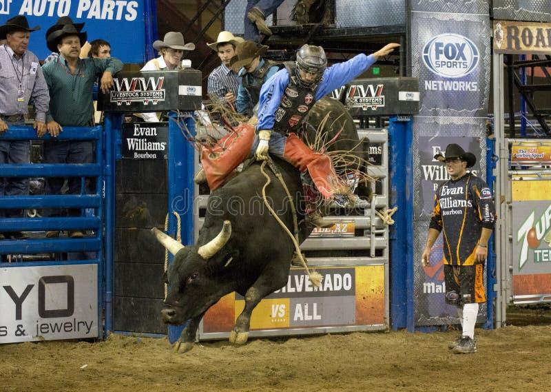 Rodeo byka jeźdza kowboje obraz stock