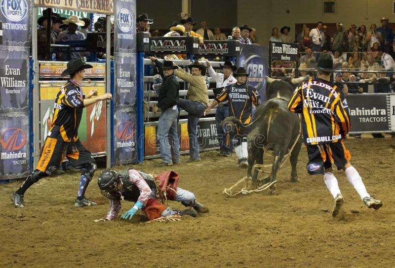 Rodeo byka jeźdza kowboje zdjęcie stock