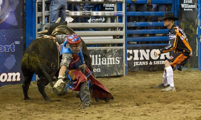 Rodeo byka jeźdza kowboje fotografia royalty free