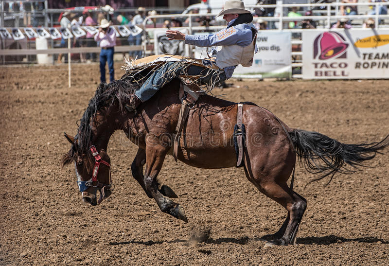 Rodeo-Cowboy auf a-schwierigem Moment stockbilder