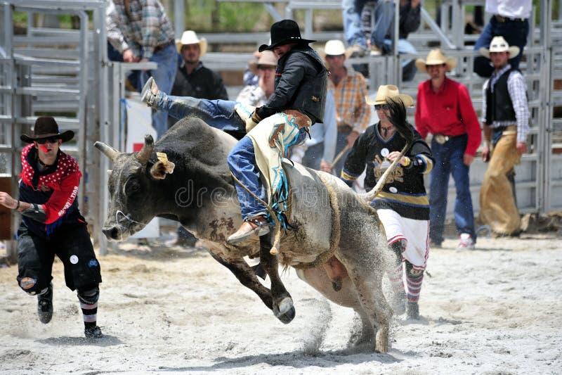 Rodeo-Erscheinen lizenzfreies stockfoto