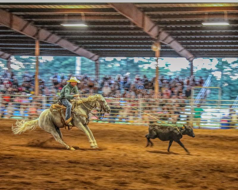Rodeo event calf roping with horse`s sliding stop. royalty free stock image