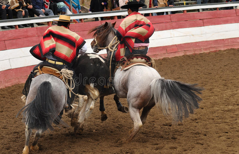 Rodeo i chile arkivbilder