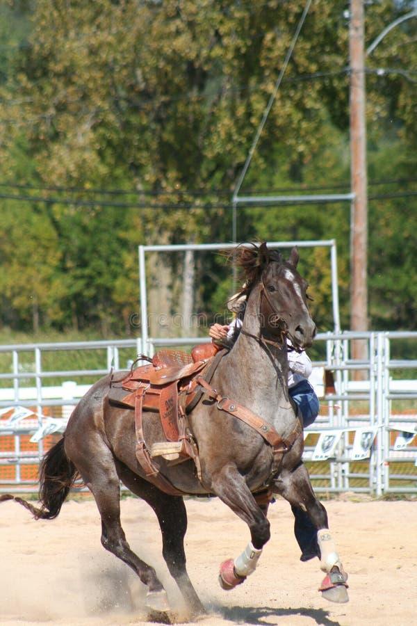 Rodeo koń obrazy royalty free