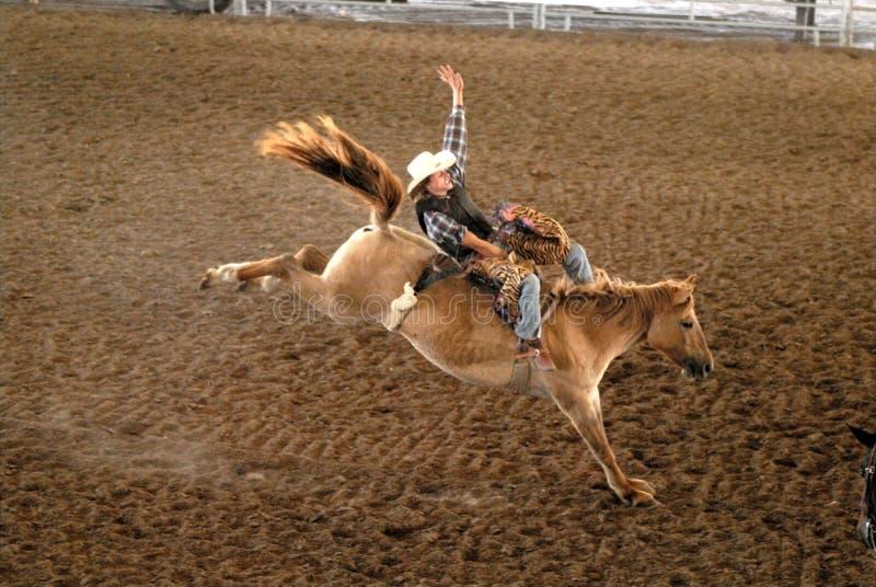Rodeo-Mitfahrer in Texas lizenzfreie stockfotografie