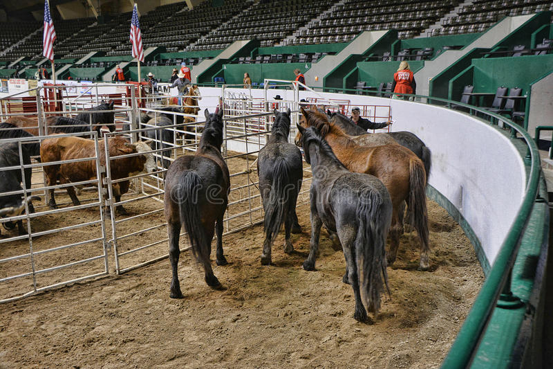 Rodeo Prep 2 royalty free stock photo