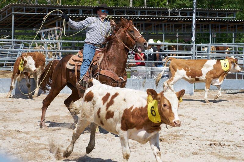 Rodeo przy kantar doliny gospodarstwem rolnym obrazy stock