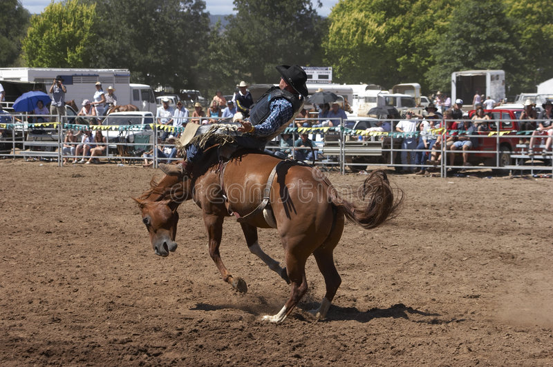 Rodeo Rider royalty free stock photography