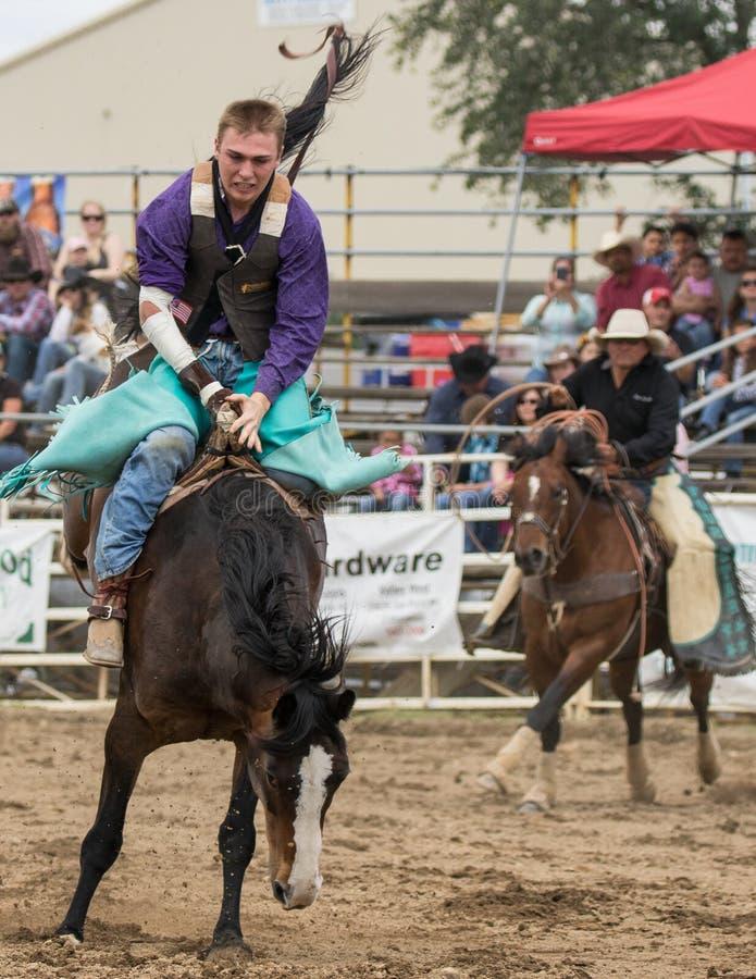 Rodeo Rider stock photo