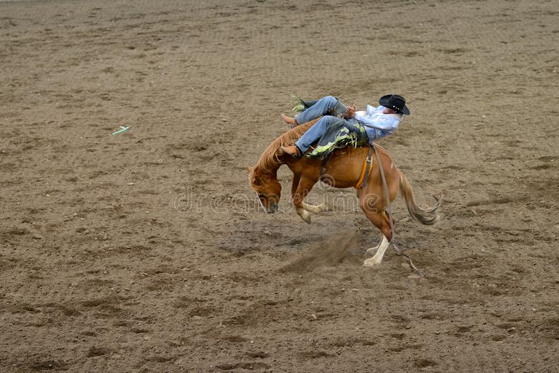 Rodeo Action Stock Image Image Of Bronco Determination