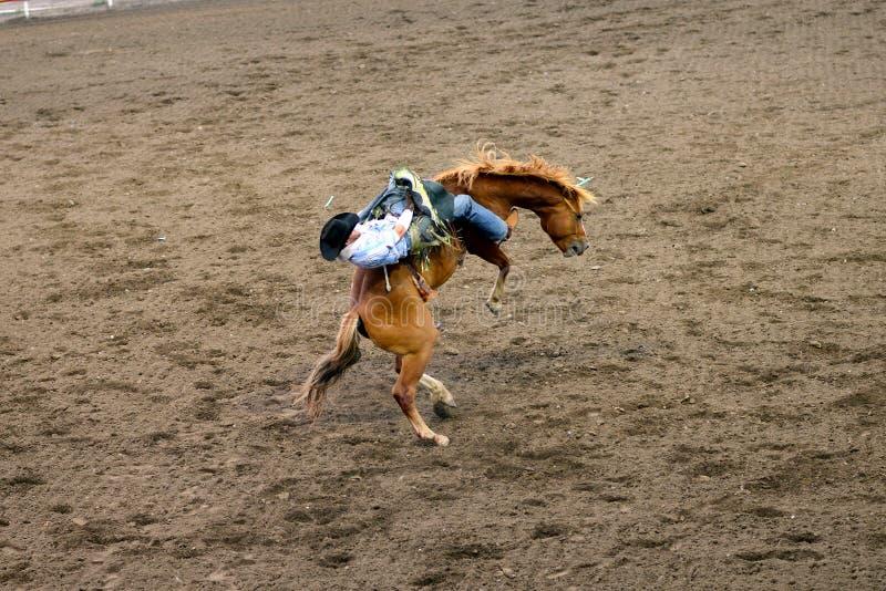 rodeo royalty-vrije stock foto
