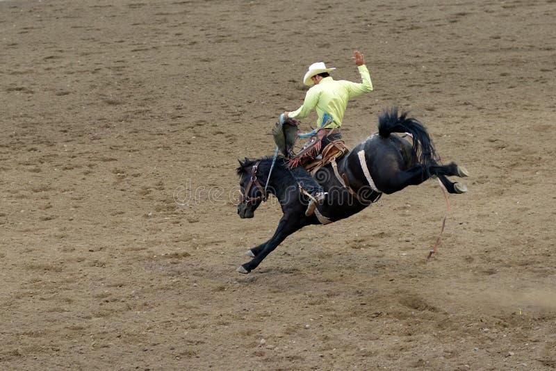 rodeo stock fotografie
