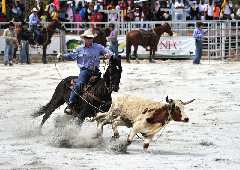 rodeo show fotografia stock