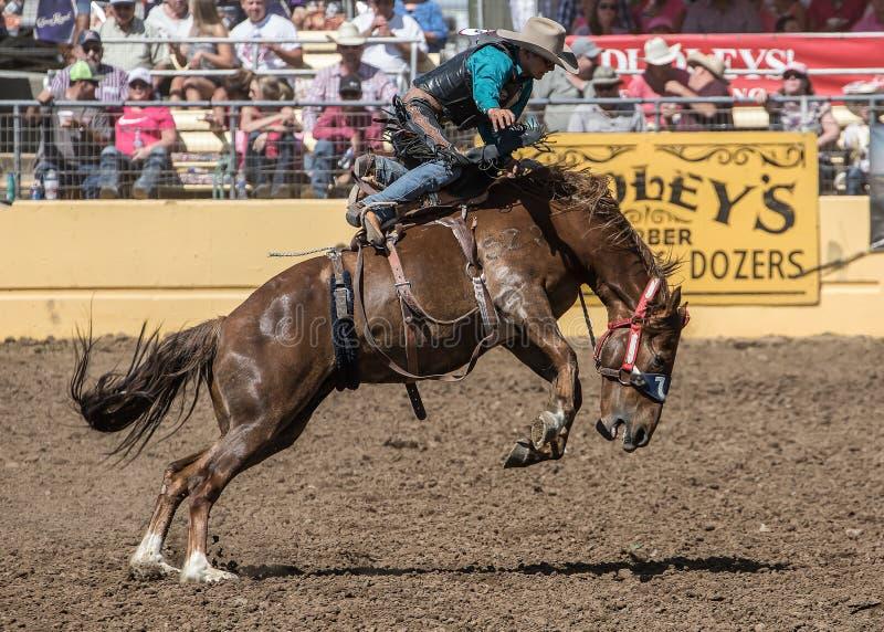 Rodeocowboy op de ruwe Rit van A royalty-vrije stock foto's