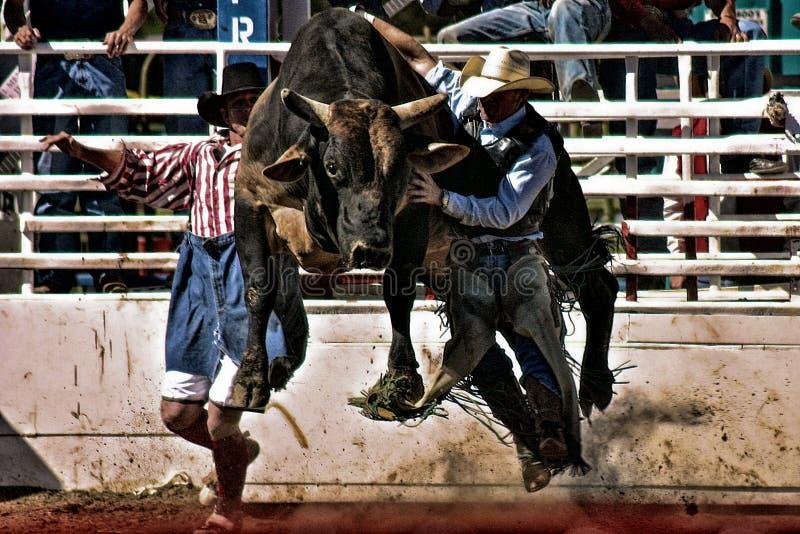 Rodeotjurritt royaltyfri foto