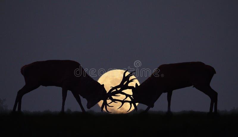 Rodera del claro de luna foto de archivo libre de regalías
